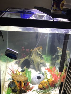 52 Gallon fish tank with decor! for Sale in Tampa, FL