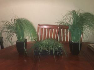 Plant decor for Sale in Brandon, FL
