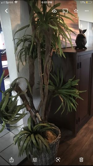 Large fake plant for Sale in Clearwater, FL