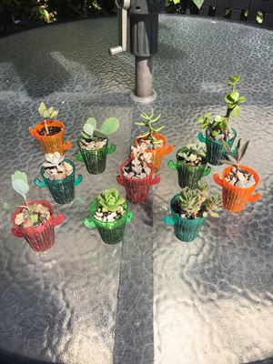 Succulent plants for Sale in Fullerton, CA
