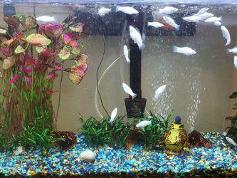 Aquarium. Fish Tank. for Sale in Haines City,  FL