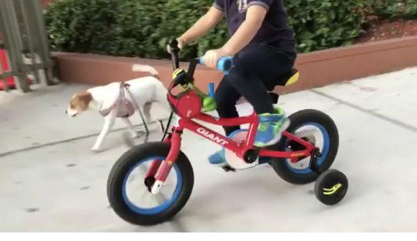 Kids bike giant