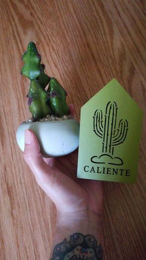 Cactus Decor for Sale in Colton, CA