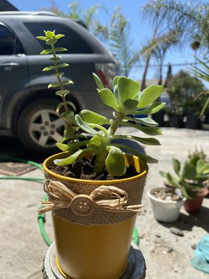 Succulents for sale! for Sale in Porterville, CA