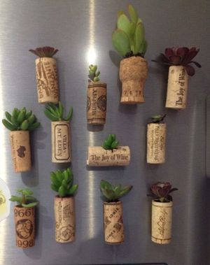 Succulent cork magnets for Sale in Modesto, CA