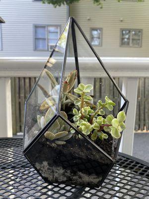 3 succulent trapezoid garden for Sale in Arlington, MA