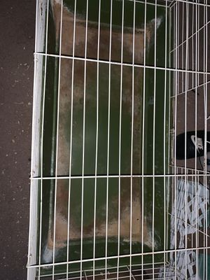 Bunny cage for Sale in Gilbert, AZ