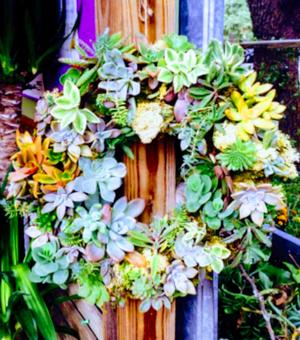 Living succulent wreath for Sale in Austin, TX