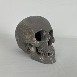 Skull For Fish Tank for Sale in Thiensville,  WI