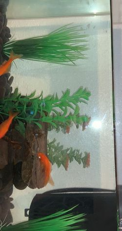 Fish Tank for Sale in Kelso,  WA