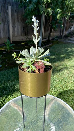 Beautiful succulent with stand for Sale in Visalia, CA