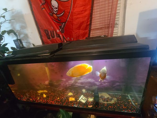 65 gallon fish tank w fish (Oscar's)