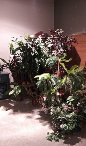 Bundle for fake plants for Sale in Arlington, TX