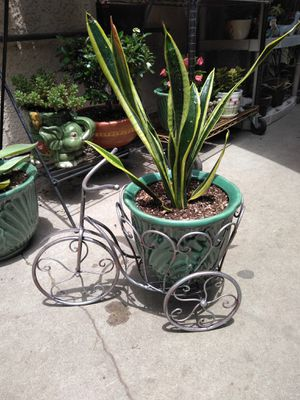 BIKE POT & PLANT (FIRM PRICE) for Sale in Paramount, CA