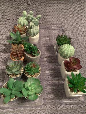 15 pieces mini succulent for Sale in Phoenix, AZ