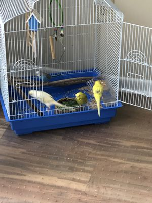 birds with cage for Sale in UPPER ARLNGTN, OH