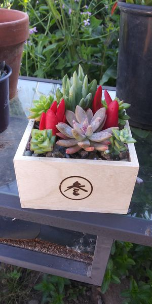 Succulent box arrangement for Sale in Vista, CA
