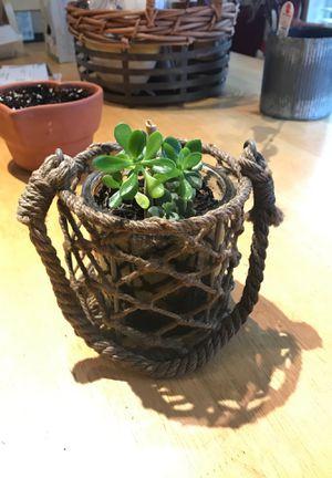 Unique planter with handle and bonus succulents for Sale in Snellville, GA