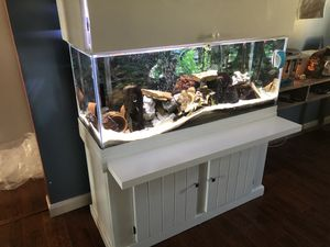 75 Gallon Malawi African Cichlid Tank for Sale in Findlay, OH