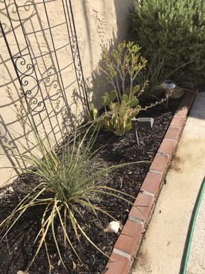 Plants cacti for Sale in Sun Lakes, AZ