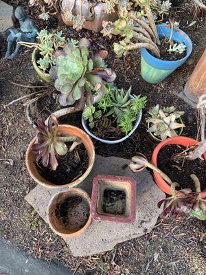 Plants and pots for Sale in La Mesa, CA