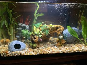 5 Gallon Fully decorated aquarium tank for Sale in Bakersfield, CA