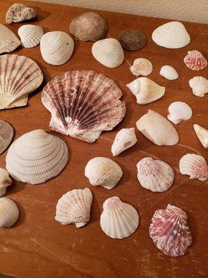 Seashells for Sale in Gresham, OR