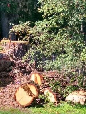 Firewood available free for Sale in Grandville, MI