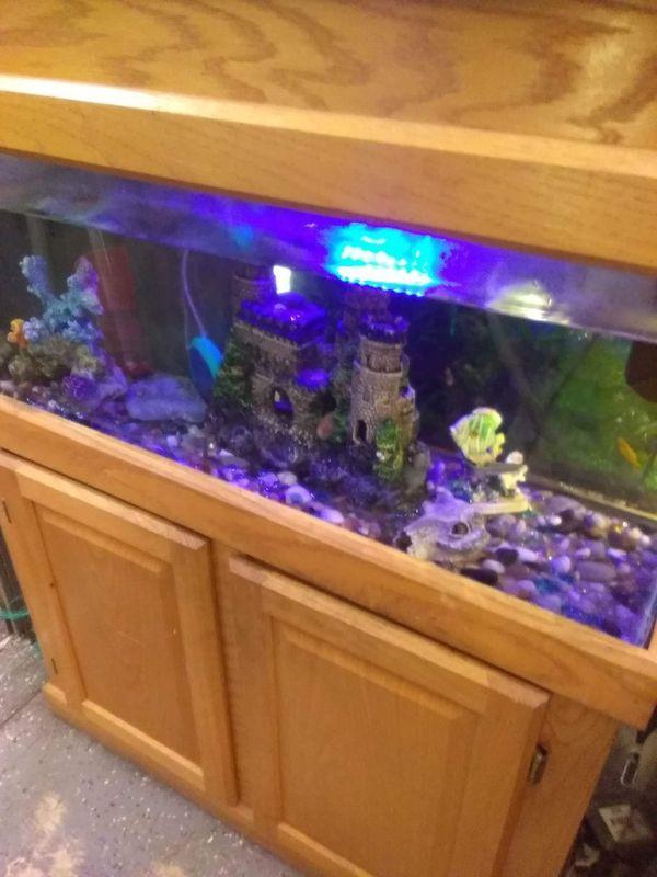 40 gallon hooded aquarium set up