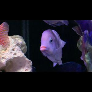 Fish Tank for Sale in Batavia, IL