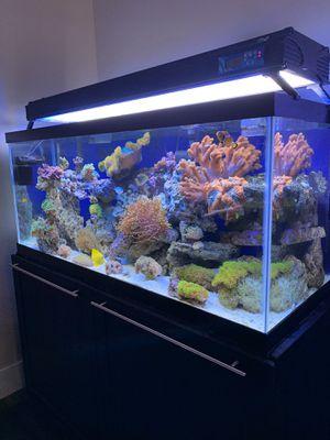 75g reef tank aquarium for Sale in Portland, OR