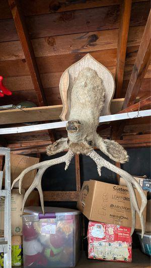 Deer head for Sale in Gardena, CA