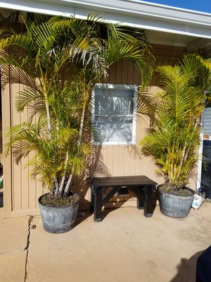 Large Potted Plants for Sale in Clearwater, FL