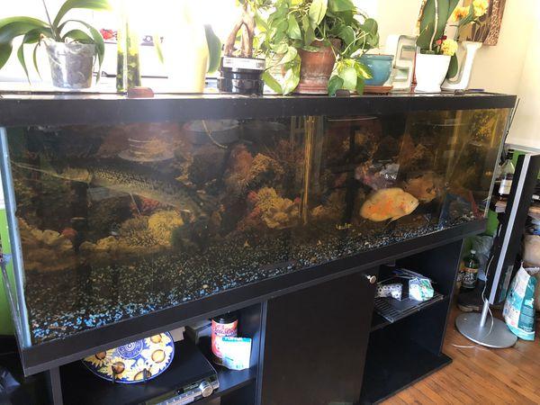 120 gallons fish tank