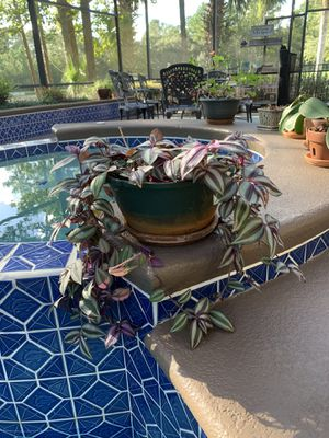 Plants/ Orchids/ Plant stand for Sale in Heathrow, FL