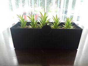 Succulents arrangements for Sale in Cicero, IL