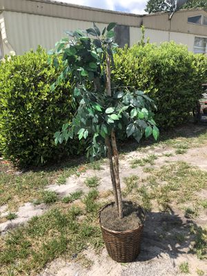 Fake plant for Sale in Alafaya, FL