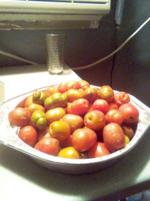Sirguelas o jocotes 5 dolares o 10 frutas por un dolar for Sale in Palm Springs, FL