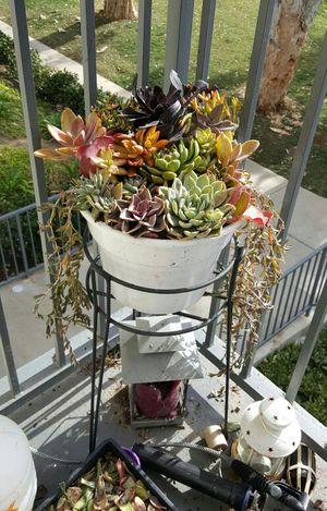 Platform Succulent arrangement for Sale in Vista, CA
