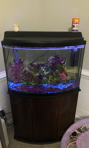 36 Gal Bow Front Aquarium with gravel filter stand heater air bubbler! for Sale in Richmond, VA