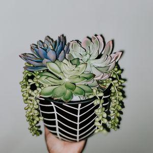 artificial succulent arrangement for Sale in Miami, FL