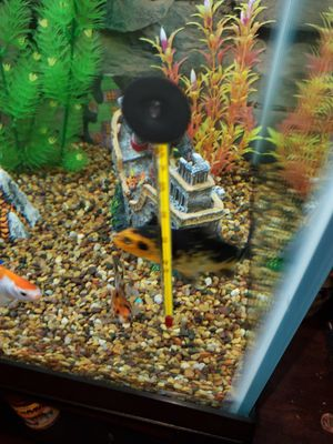 65 gallon fish tank. Fish not included for Sale in Rossville, GA