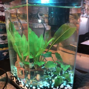 Fish Tank, 2.2 Gallon Fully Equipped With Live Plants for Sale in Henderson, NV