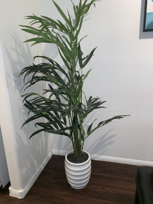 New Huge Plant! 6 feet tall !