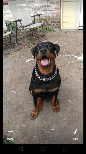 Dog Chain Collar for Sale in Houston, TX