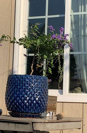 Free plants must take all for Sale in La Puente, CA