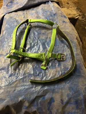 New sparkly horse halter for Sale in Eolia, MO