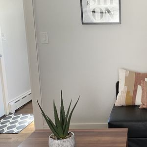 Interior Decorator (ANY Budget) for Sale in East Meadow, NY
