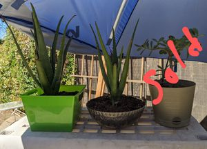 Aloe Vera plants in pot for Sale in Fresno, CA
