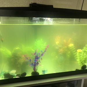10 Gallon Fish Tank for Sale in Fairfield, CA